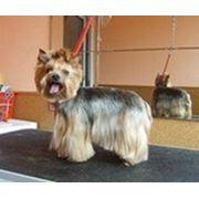 Стрижка, тримминг собак и кошек фото
