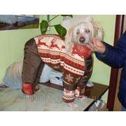 Одежда для животных, пошив фото