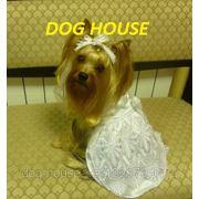 Профессиональный салон & бутик для собак и кошек Dog House, Калуга. фото