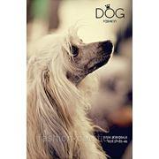 Стрижка собак Fashion Dog фото