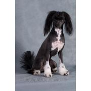 Стрижка собак фото