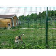 Загородная гостиница для собак ЗооЭкоотель фото