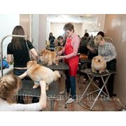 Курсы стрижки собак фото