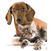 Передержка животных в домашних условиях фото