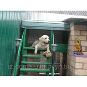 Зоогостиница, передержка для собак фото