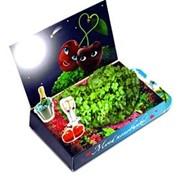 Вишенки Живая открытка Happy Plant наборы для выращивания фото
