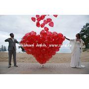 фото предложения ID 7564034