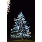 Украшение елки к новому году, новогоднее оформление елки гирляндами и декором, иллюминация уличных елок