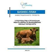 Бизнес-план инвестиционного проекта создания фермы по выращиванию мясных пород скота фото