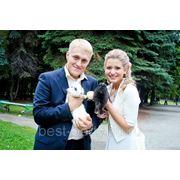 Свадебные кролики и голуби фото
