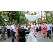 Гелевые - био голуби на свадьбу в Алуште, Ялте и Симферополе! фото