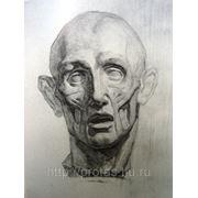 Рисунок анатомической головы Экарше, портрет карандашом фото