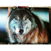 """Картина """"Волк"""" фото"""