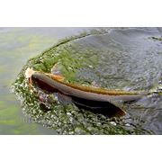 Рыболовный тур «Рыбалка на реке Голыгина» фото