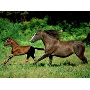 Постой и содержание частных лошадей в Казани фото