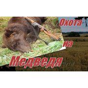 Охота на Медведя на овсах фото