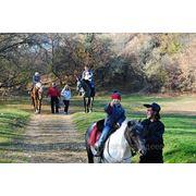 Верховая езда, конные прогулки, лошади в Ростове. фото