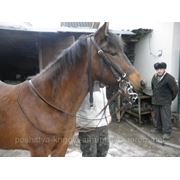 Вуздечка на коня фото