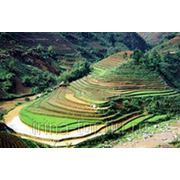 Вьетнам / Фантхиет / Муйне !!! Вылет 05.11 на 14 дней питание завтраки фото