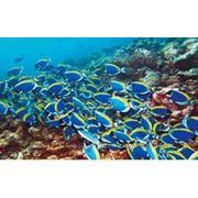 Туры на Мальдывы.Отдых по минимальным ценам!!! фото