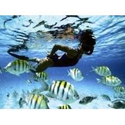 О. Барбадос фото