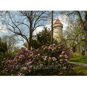 Свадьба в Чешском замке Конопиште фото