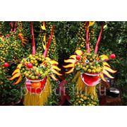 Новый Год во Вьетнаме фото