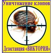 Уничтожение клопов,дератизация, дезинсекция, дезинфекция, в Алматы, заказать услуги дезинфекции в Алматы фото