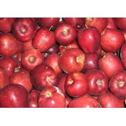 Продам яблоки Старкимсон фото