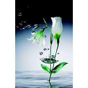"""Фотообои """"Кристальные цветы"""" Wizard&Genius (Швейцария) фото"""