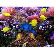 Фотообои Подводный мир фото