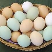 Продукты яичные фото