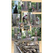 Удалить дерево (валка деревьев) фото