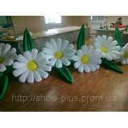 Надувные цветы (пневмоцветы) Ромашки фото