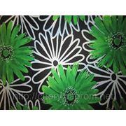 Зеленая хризантема фото