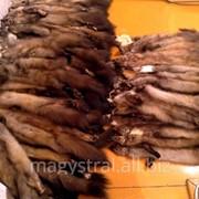 Шкурки куницы на экспорт фото