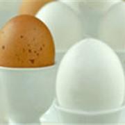 Яичные продукты фото