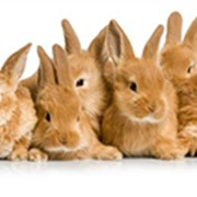 Квест для детей на природе Братцы Кролики фото