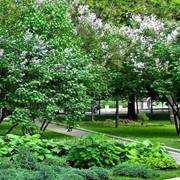 Озеленение территорий №9 фото