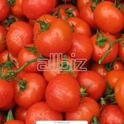 Купить помидоры от производителя фото