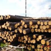 Закупка лесоматериалов, балансов, щепы, тех. дрова фото