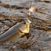 Многодневный тур на рыбалку фото