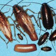 Профессиональное выведение клопов, тараканов, муравьев и прочих насекомых с гарантией 12 месяцев. фото