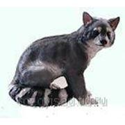 Енот серый аф0051-1 фото
