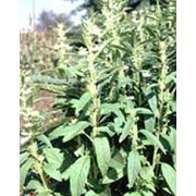 Масло растительное нерафинированное кунжутное фото