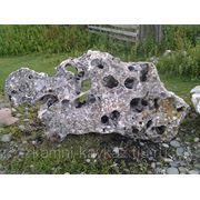 Выветренный степняк (живой камень) фото