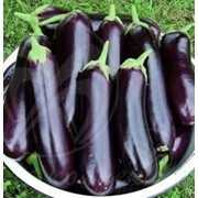 Баклажан Длинный пурпурный фото
