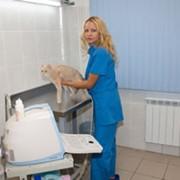 Лабораторная и инструментальная диагностика фото