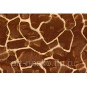 Зоо нью жираф фото