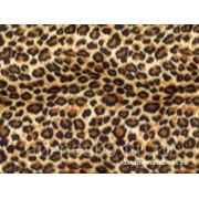 Зоо леопард мульти фото